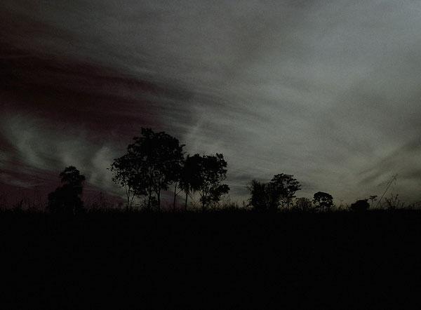 暗い空、木のシルエット