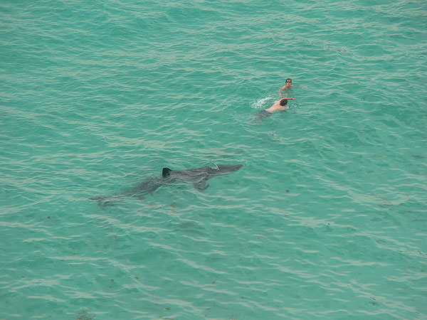 ウバザメと人間