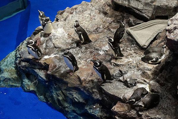岩盤上のペンギン